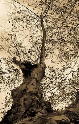 Photograph - Autumn Sky In Sepia Tones by Andrea Mazzocchetti