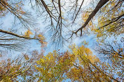 Photograph - Autumn Sky  by John McGraw