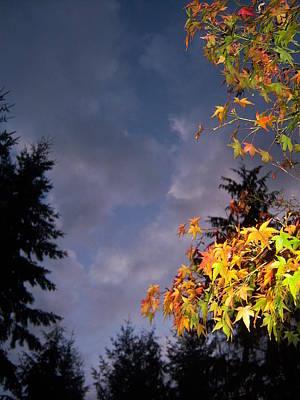 Autumn Sky Art Print by Ken Day