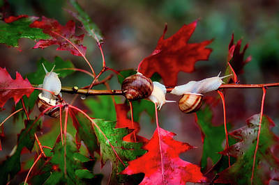 Photograph - Autumn Snail Trail by Adina Voicu