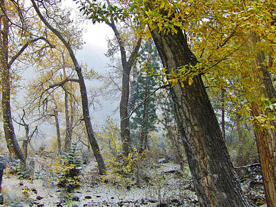 Photograph - Autumn Snow by Marilyn Diaz