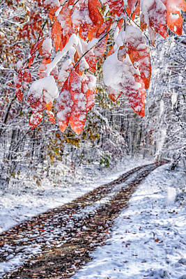 Photograph - Autumn Snow Red Leaves by Thomas R Fletcher
