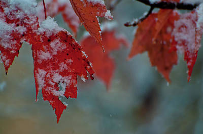 Autumn Snow Print by Venura Herath