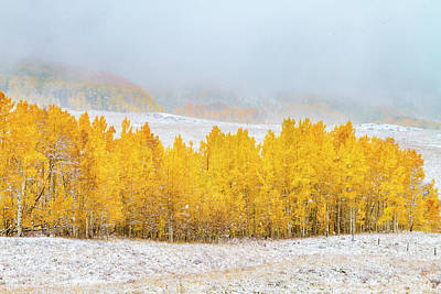Photograph - Autumn Snowstorm by Teri Virbickis