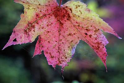 Digital Art - Autumn, Soft by Patrick Groleau