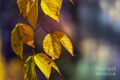 Photograph - Autumn Sonata by Rima Biswas