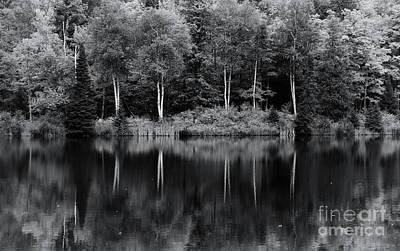 Photograph - Autumn Song In Monochrome by Rachel Cohen