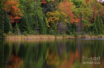 Photograph - Autumn Song by Rachel Cohen