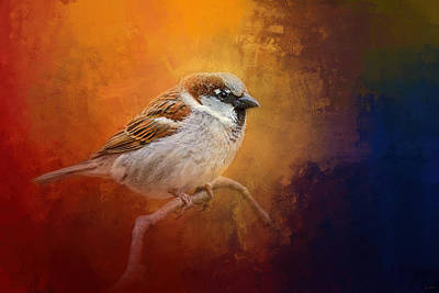 Tiny Bird Photograph - Autumn Sparrow by Jai Johnson