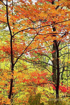 Painting - Autumn Splendor Fall Colors Leaves And Trees Ap by Dan Carmichael