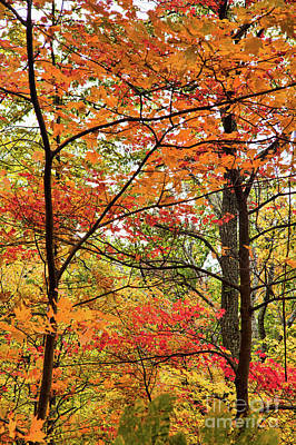 Photograph - Autumn Splendor Fall Colors Leaves And Trees by Dan Carmichael