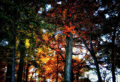Photograph - Autumn Splendor by Gerlinde Keating - Galleria GK Keating Associates Inc