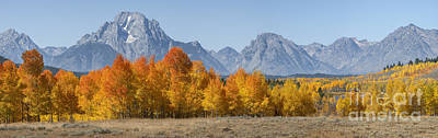 Photograph - Autumn Splendor II by Sandra Bronstein