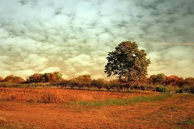 Pumpkin Fields Photograph - Autumn Splendor In The Orchard - Battlefield Orchards by Angie Tirado
