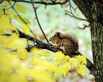 Photograph - Autumn Squirrel by Kerri Farley