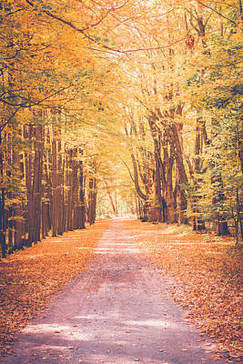 Photograph - Autumn Sroll by Sara Frank