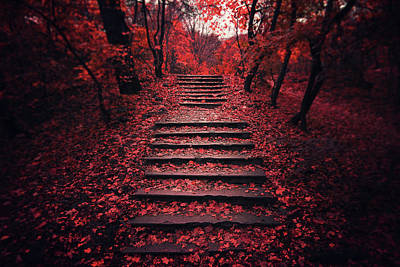 Red Tree Photograph - Autumn Stairs by Zoltan Toth