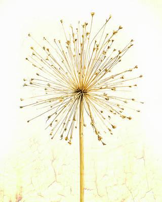 Photograph - Autumn Star by Hal Halli
