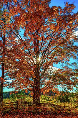 Back Roads Digital Art - Autumn Star- Paint by Steve Harrington