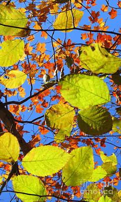 Photograph - Autumn Stars by France Laliberte