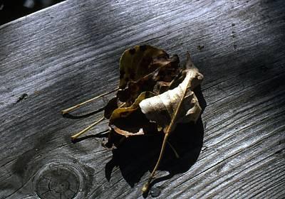 Photograph - Autumn Still Life by John Schneider