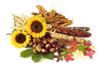 Photograph - Autumn Still Life Sunflowers Corn Nuts Leafs by R Muirhead Art