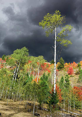 Photograph - Autumn Storm Light  by Kathleen Bishop
