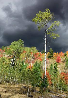 Photograph - Autumn Storm Light  by Kathleen Bishop