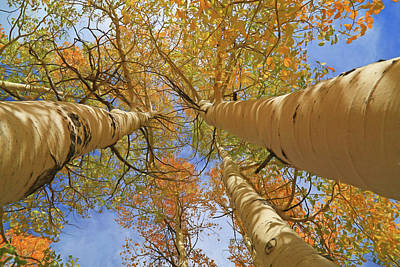 Fall Colors Photograph - Autumn Straight Up by Donna Kennedy