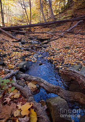 Photograph - Autumn Stream by Barbara McMahon