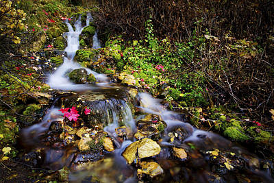 Water Fall Photograph - Autumn Stream by Chad Dutson