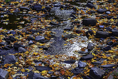 Meandering Photograph - Autumn Stream by Garry Gay