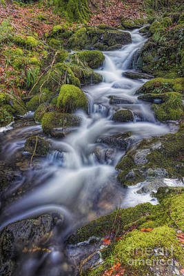 Photograph - Autumn Stream by Ian Mitchell