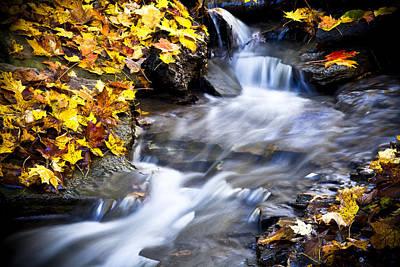 Fallen Leaf Photograph - Autumn Stream No 2 by Kamil Swiatek