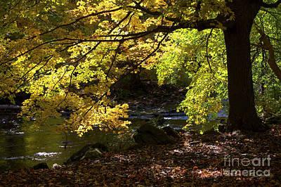 Pyrography - Autumn Stream by Tom Brickhouse