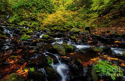 Photograph - Autumn Streams by Mike Dawson