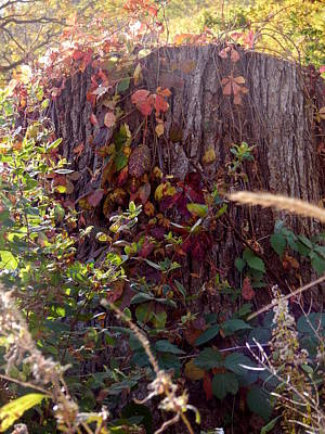 Photograph - Autumn Stump by Wild Thing