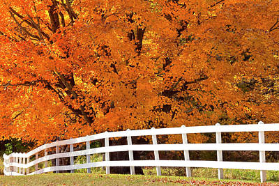 Photograph - Autumn Sugar Maples by Alan L Graham