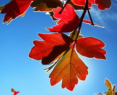 Photograph - Autumn Sumac by Leah Grunzke