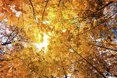 Pittsburgh According To Ron Magnes - Autumn Sun by David Oakill