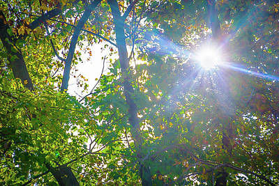 Forest Photograph - Autumn Sun, Ray Of Hope by Rick Grossman