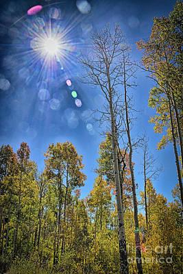 Valentines Day - Autumn Sunbeams by Janice Pariza
