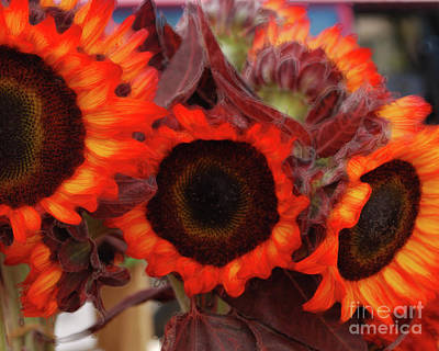 Photograph - Autumn Sunflowers by Sharon Kalstek-Coty