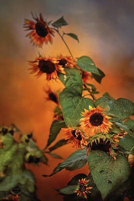 Photograph - Autumn Sunflowers by Theresa Campbell