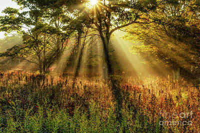 Photograph - Autumn Sunlight Dolly Sods by Thomas R Fletcher