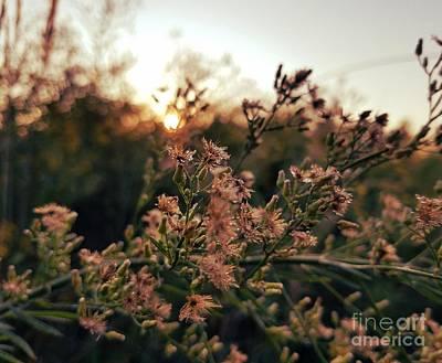 Photograph - Autumn Sunrise by Maria Urso