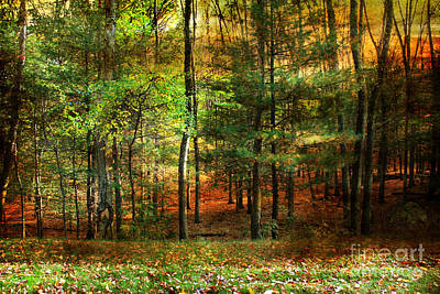 Photograph - Autumn Sunset - In The Woods by Judy Palkimas