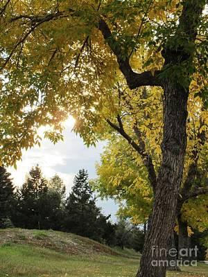 Photograph - Autumn Sunset by Irenka Hammell