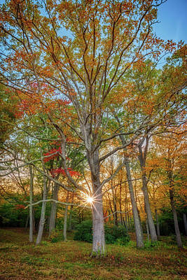 Photograph - Autumn Sunset Through The Trees by Rick Berk