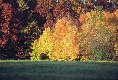 Photograph - Autumn Sunshine by Bernard Lynch
